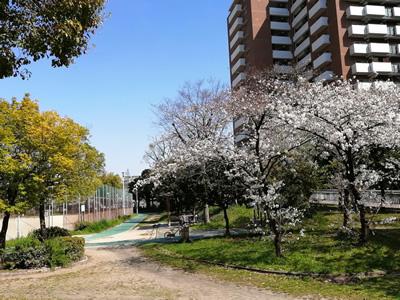 クリニック裏手の長柄東公園