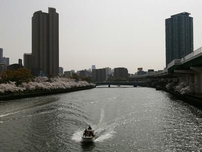飛翔橋の上から見た大川と桜